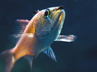 釣り物のイメージ